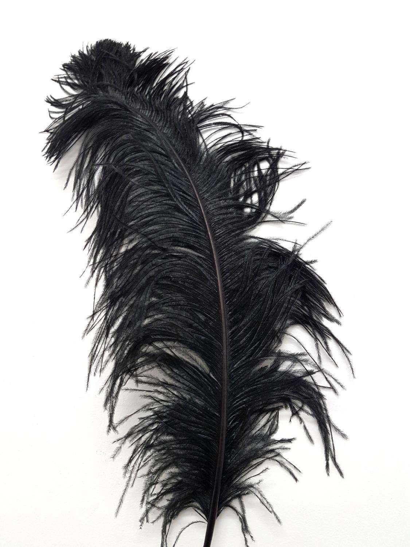 Antikcostume plume d 39 autruche 50 60 cm l 39 unit - Plume noire signification ...